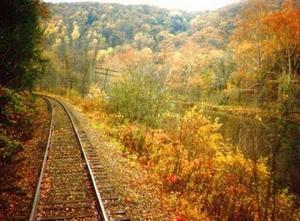 Лес в окне поезда