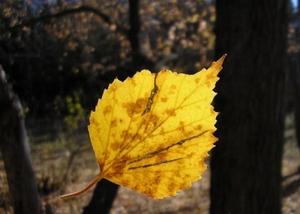 Одинокий жёлтый лист